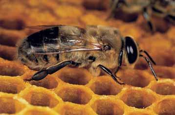 Vabilo na čebelarsko razstavo